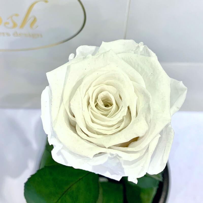 Біла троянда в колбі Lerosh - Classic 27 см