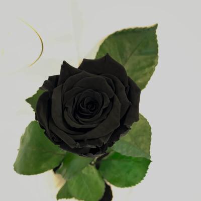 Чорна троянда в колбі Lerosh - Classic 27 см ORIGINAL