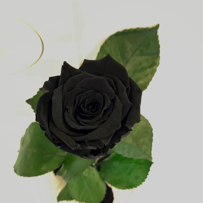 Black Eternal Rose in Flask Lerosh - Classic 27 cm