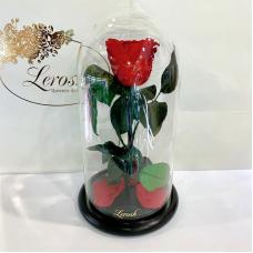 Червона троянда в колбі Lerosh - Classic 27 см