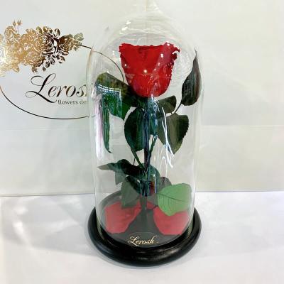 Троянди в колбі Classic 27 см ➖➤ різні кольори від 1300 грн