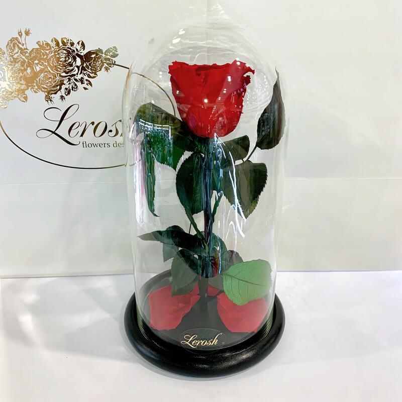 Red Eternal Rose in Flask Lerosh - Classic 27 cm