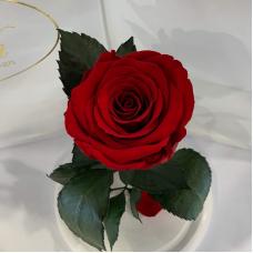 Червона троянда в колбі Lerosh - Classic 27 см на білій підставці