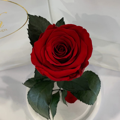 Red Eternal Rose in Flask Lerosh - Classic 27 cm on a white stand