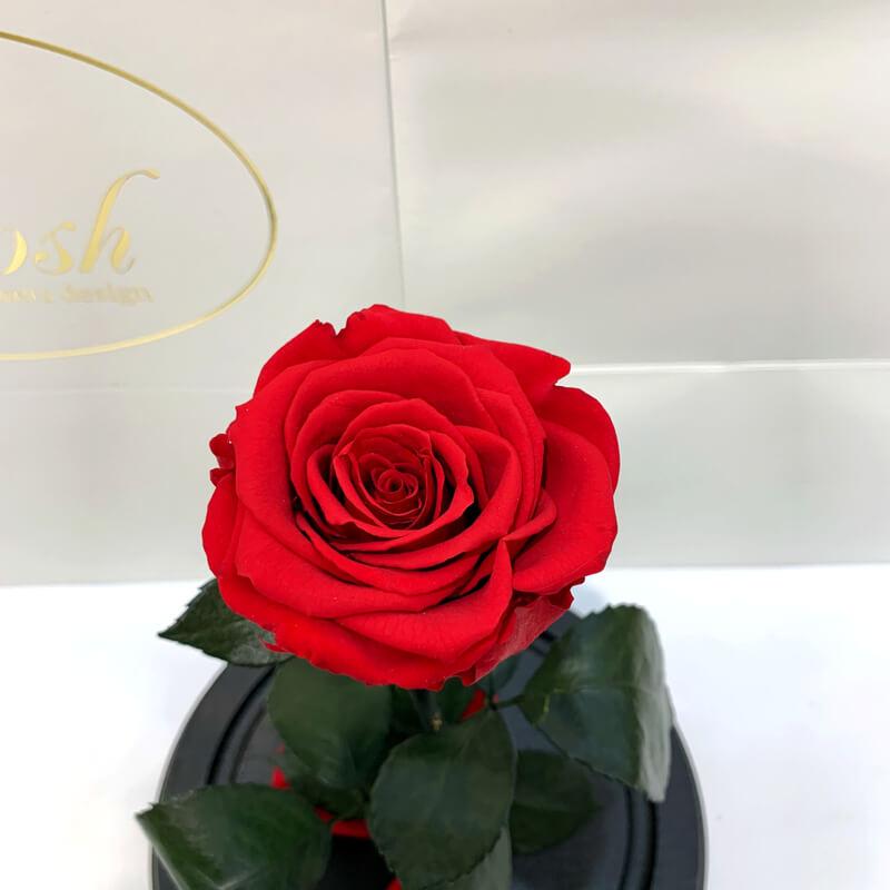Червона троянда в колбі Lerosh - NEW Classic 27 см