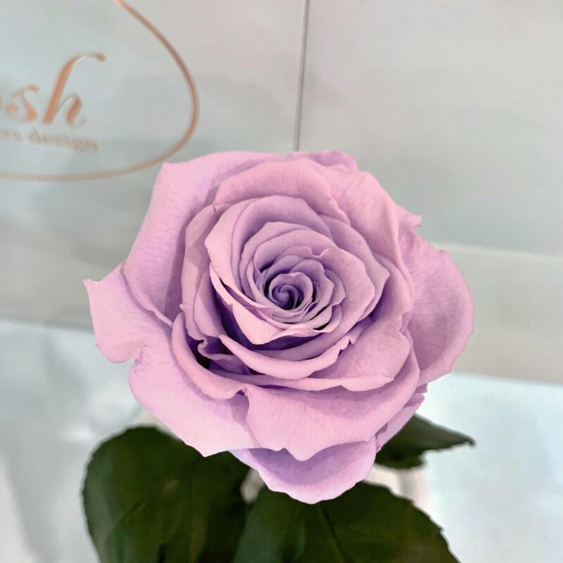 Лілова троянда в колбі Lerosh - Classic 27 см