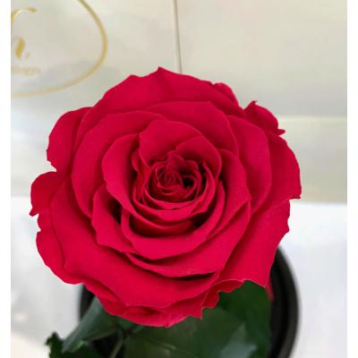 Малиновая роза в колбе Lerosh - Classic 27 см