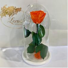 Помаранчева троянда в колбі Lerosh - Classic 27 см