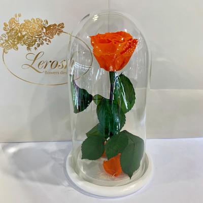 Помаранчева троянда в колбі Lerosh - Classic 27 см ORIGINAL