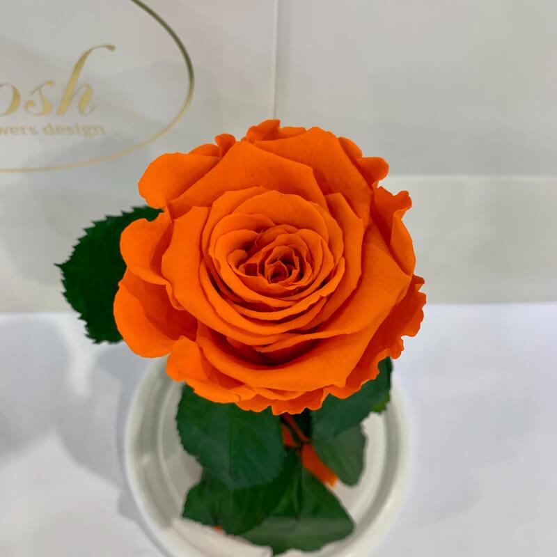 Orange Eternal Rose in Flask Lerosh - Classic 27 cm