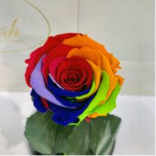 Яскрава Різнокольорова троянда в колбі Lerosh - Classic 27 см