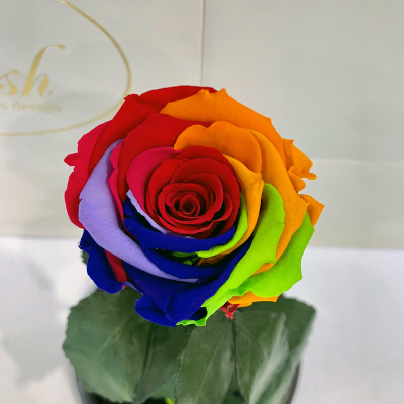 Bright Rainbow Eternal Rose in Flask Lerosh - Classic 27 cm