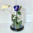 Синяя роза в колбе Lerosh - Classic 27 см ORIGINAL