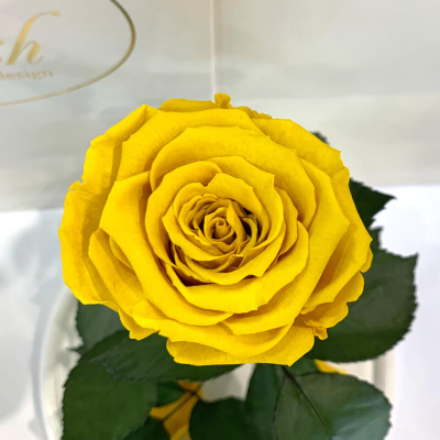 Yellow Eternal Rose in Flask Lerosh - Classic 27 cm
