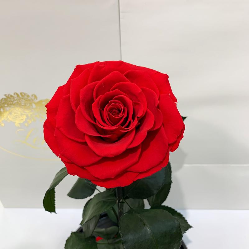 Червона троянда в колбі Lerosh - Elite 43 см
