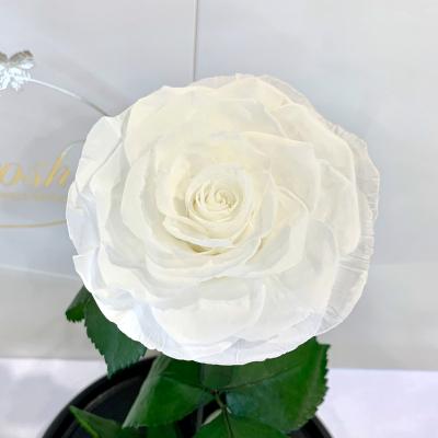 White Eternal Rose in Flask Lerosh - Lux 33 cm
