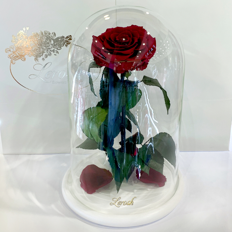 Бордово-малинова троянда в колбі Lerosh - Lux 33 см