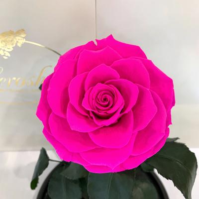 Яскраво-рожева Фуксія троянда в колбі Lerosh - Lux 33 см на білій підставці ORIGINAL