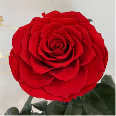 Червона троянда в колбі Lerosh - Lux 33 см  на білій підставці