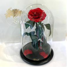 Червона Діамантова троянда в колбі Lerosh - Lux 33 см