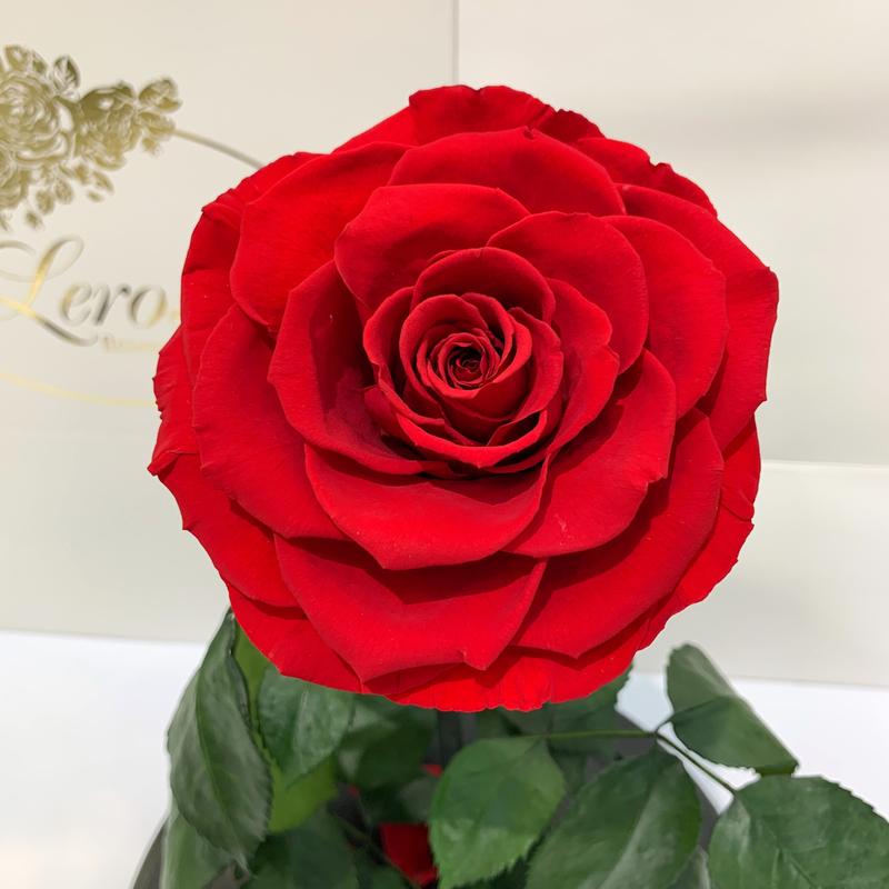 Червона троянда в колбі Lerosh - Lux 33 см