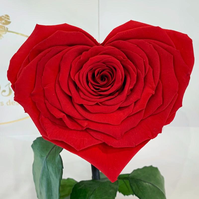 Червона троянда в колбі Серце Lerosh - Lux 33 см