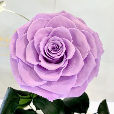 Лілова троянда в колбі Lerosh - Lux 33 см на білій підставці ORIGINAL