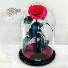 Малинова троянда в колбі Lerosh - Lux 33 см