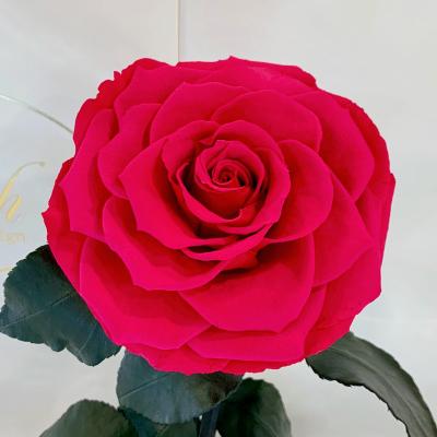 Малинова троянда в колбі Lerosh - Lux 33 см ORIGINAL