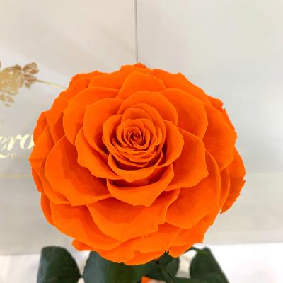 Помаранчева троянда в колбі Lerosh - Lux 33 см
