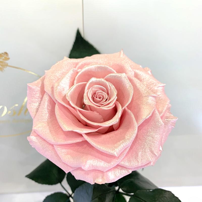 Рожева Перлова троянда в колбі Lerosh - Lux 33 см