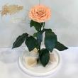 Персиковая роза в колбе Lerosh - Lux 33 см ORIGINAL