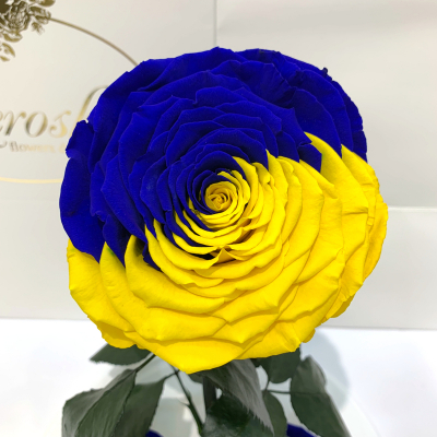 """Троянда в колбі """"Прапор України"""" Lerosh - Lux 33 см на білій підставці"""