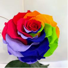 Яскрава Різнокольорова троянда в колбі Lerosh - Lux 33 см