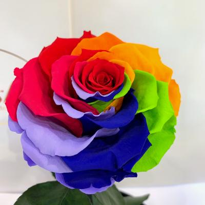 Яскрава Різнокольорова троянда в колбі Lerosh - Lux 33 см ORIGINAL