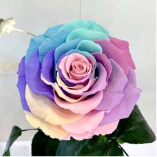Ніжна Райдужна троянда в колбі Lerosh - Lux 33 см