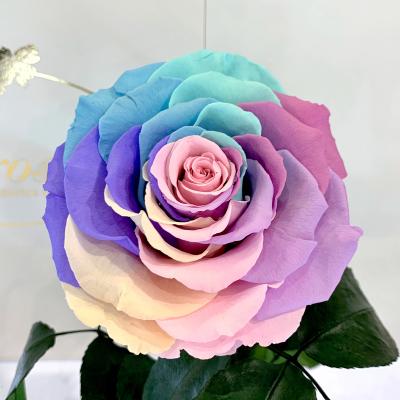 Ніжна Райдужна троянда в колбі Lerosh - Lux 33 см ORIGINAL
