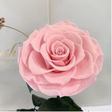 Рожева троянда в колбі Lerosh - Lux 33 см