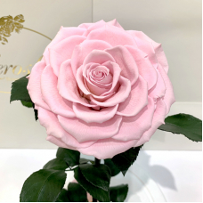 Рожева троянда в колбі Lerosh - Lux 33 см на білій підставці