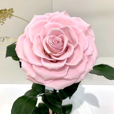 Розовая роза в колбе Lerosh - Lux 33 см на белой подставке