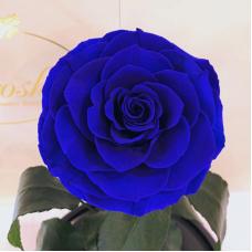 Синя троянда в колбі Lerosh - Lux 33 см