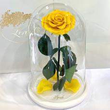 Жовта троянда в колбі Lerosh - Lux 33 см