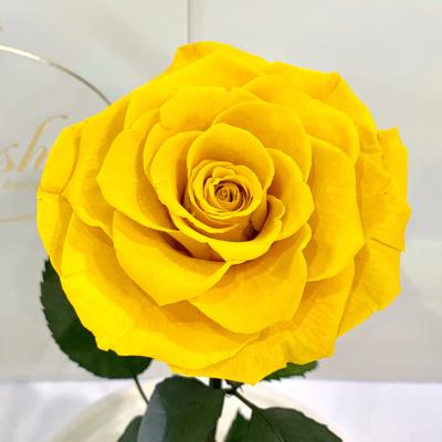 Yellow Eternal Rose in Flask Lerosh - Lux 33 cm
