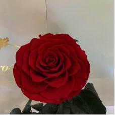 Темно-Червона троянда в колбі Lerosh - Premium 27 см