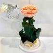 Peach Eternal Rose in Flask Lerosh - Premium 27 cm ORIGINAL