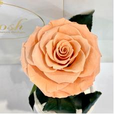 Персикова троянда в колбі Lerosh - Premium 27 см