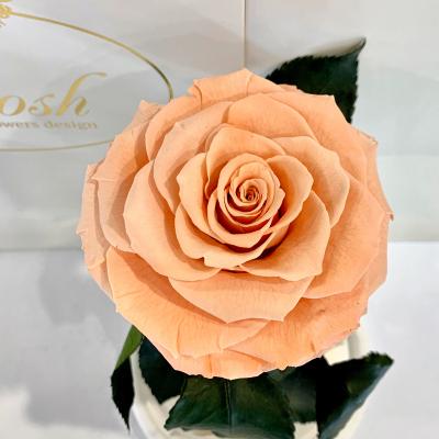 Персиковая роза в колбе Lerosh - Premium 27 см ORIGINAL