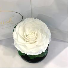 Біла троянда в колбі Lerosh - Premium 27 см