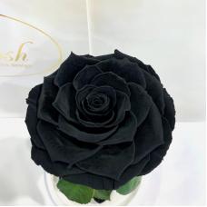 Чорна троянда в колбі Lerosh - Premium 27 см