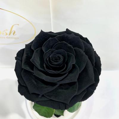 Черная роза в колбе Lerosh - Premium 27 см ORIGINAL